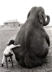 abraço-elefante-9-razões-para-dar-e-receber-abraços-todos-os-dias