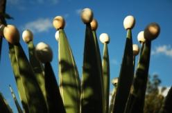 plantacao-de-ovo